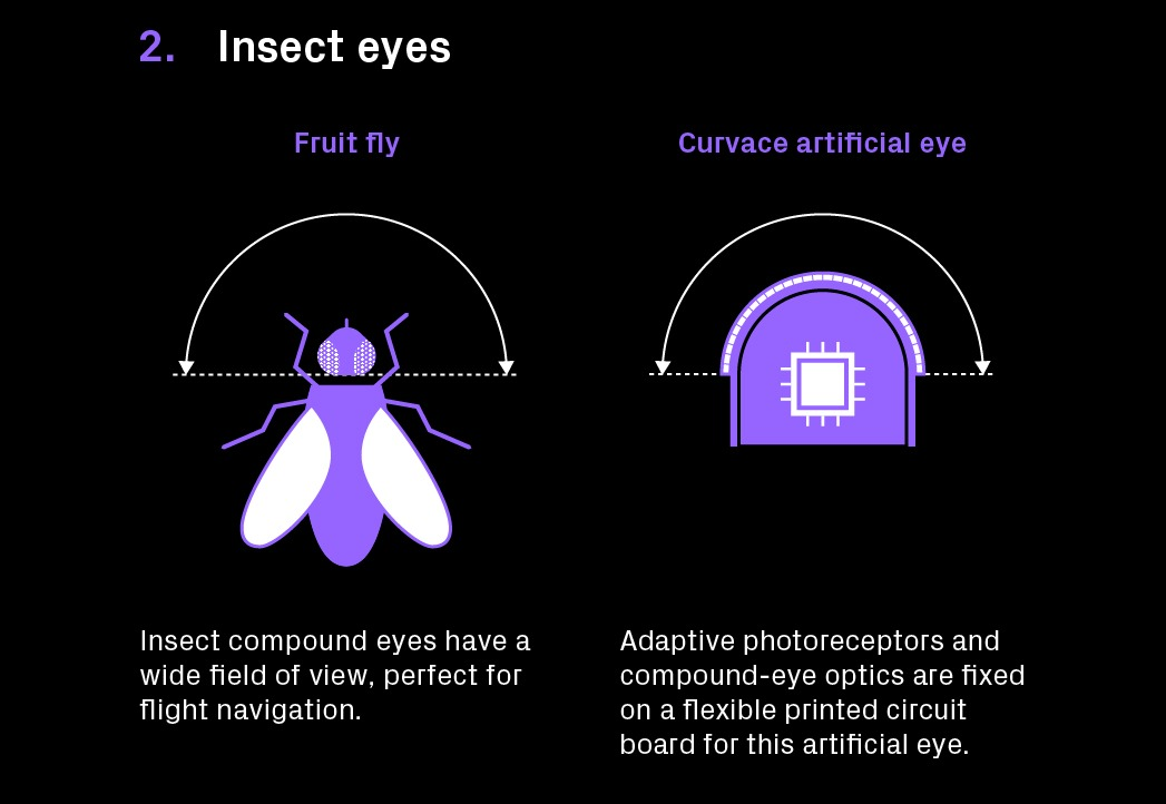 LN Technologist Infographie DronesInsectes 03 - Drones designed like bugs